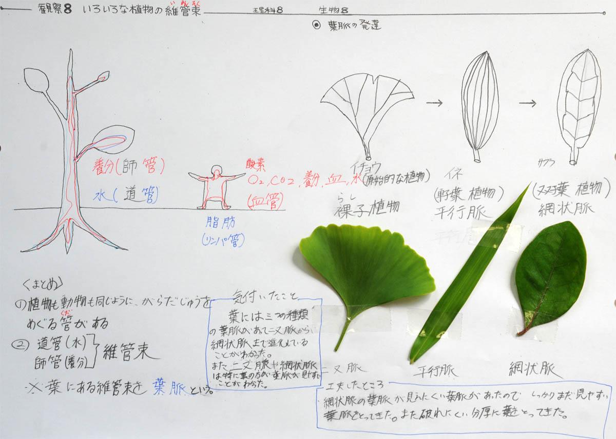 観察8:いろいろな植物の ... : プリント学習 : プリント
